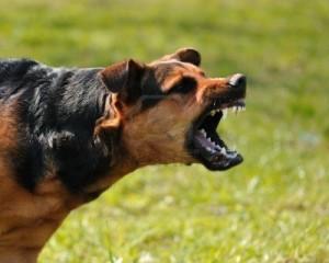 7249878-angry-dog-with-bared-teeth